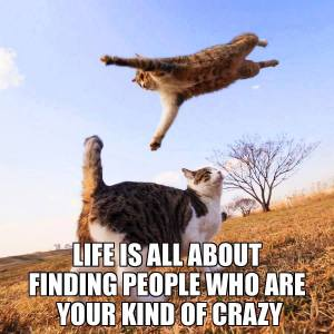 life is about finding people who are your kind of crazy--leaping cats