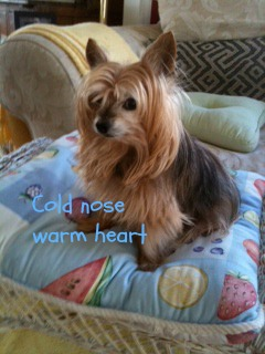 Max cold nose warm heart